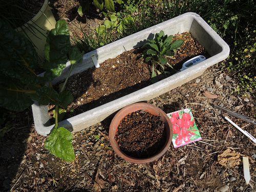 日なたの植木鉢で実験するのはこの2つの植木鉢