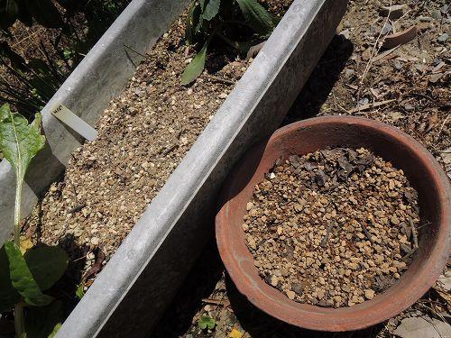 使い古しのプランターの土は乾き気味
